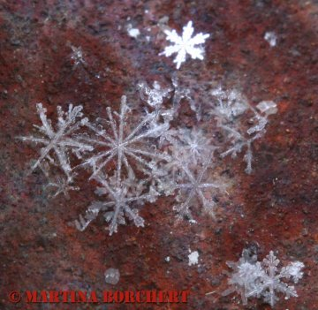 estrellitas-de-nieve